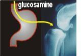 Glucosamina: dallo stomaco dritta in cartilagine