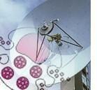 Mastocita: antenna dell'immunità