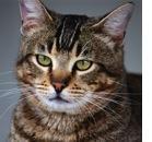 CDS: anche il gatto ne soffre