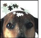 Neurodegenerazione: nuove evidenze nel cane anziano
