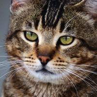L'Alzheimer del gatto