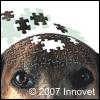 CDS nel cane e Alzheimer nell'uomo