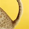 Identikit di un gatto con cistite