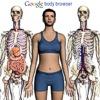 Google scopre il corpo umano