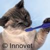 Lavare i denti al cane o al gatto? Si può!