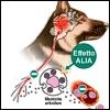 Glupamid nell'infiammazione e nel dolore da artrosi