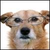 Anche i cani invecchiano