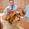 Prima protesi di ginocchio nel gatto