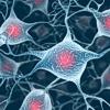 Demenza senile del cane: conferme di neurodegenerazione