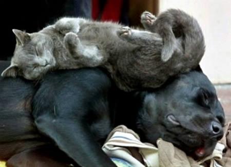 I nostri animali sognano?