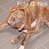 Il prurito nel cane: consigli pratici per una corretta gestione
