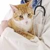 Valutazione della dermatite allergica nel gatto