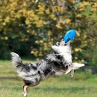 Cani atleti: istruzioni per l'uso