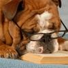 Perché i cani si annoiano?