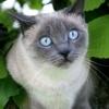 Il tecnico veterinario e l'artrosi del gatto