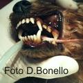 Dentistica: le malattie che dipendono dalla razza