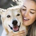 Il cane usa il padrone come il bambino usa il genitore