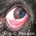 Occhio rosso: un nome per tante malattie
