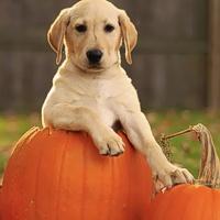 Halloween sicuro per i quattrozampe