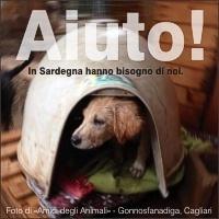 Emergenza Sardegna: Innovet c'è