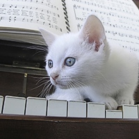 MUSICA CLASSICA PER I GATTI IN CHIRURGIA