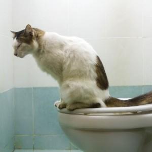 Quando il gatto è a rischio cistite