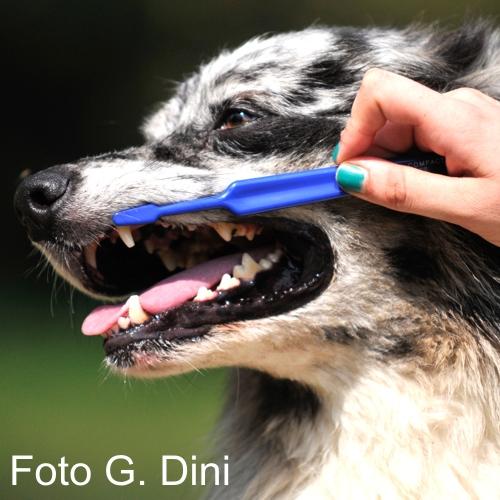 Lavare i denti al cane? Meglio farlo tutti i giorni
