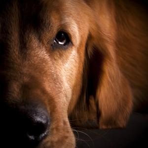 Senilife® per cani e gatti anziani con problemi cognitivi