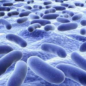 Mastociti in prima linea contro le infezioni