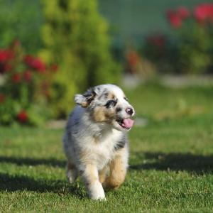 Come prevenire i problemi ortopedici del cucciolo