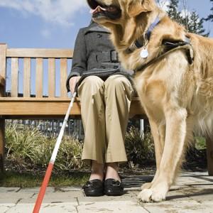Proteggere le articolazioni dei cani guida