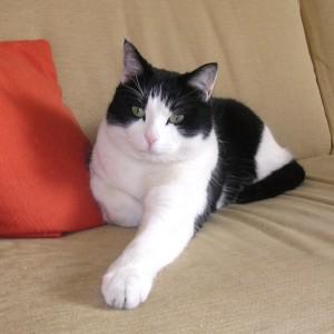 La qualità della vita nei gatti con malattia renale