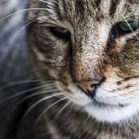Artrosi del gatto… Non zoppica, ma soffre