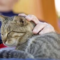 Gatti anziani con reni a rischio