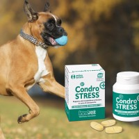 Condrostress® (+): più efficace per l'artrosi?
