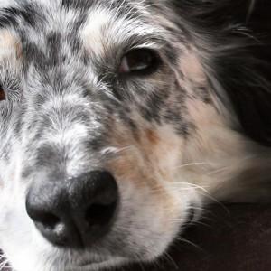 Anche i cani ricordano le esperienze della loro vita