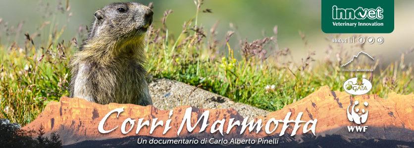 Un documentario per salvare la vita a 2000 marmotte