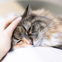 Reni: i punti deboli del gatto