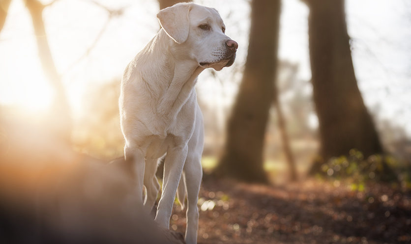Il profilo tipo del cane con artrosi