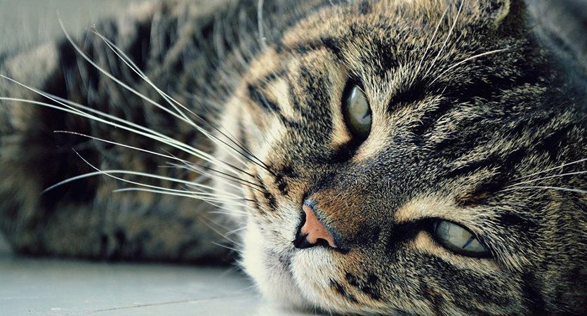 Artrosi Gatto