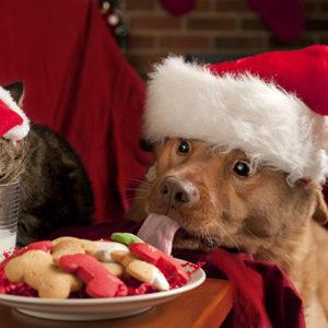 Cani e gatti, Babbo Natale viene anche per loro