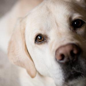 Dolore articolare del cane: nessuno dovrebbe soffrire in silenzio!
