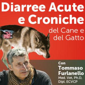 Diarree acute e croniche del cane e del gatto, con Tommaso Furlanello