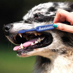 Alzi la mano chi spazzola i denti al cane