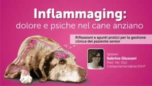 Inflammaging: dolore e psiche nel cane anziano - PRIMA PARTE