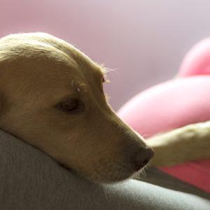 I cani in famiglia proteggono i neonati dalle allergie alimentari