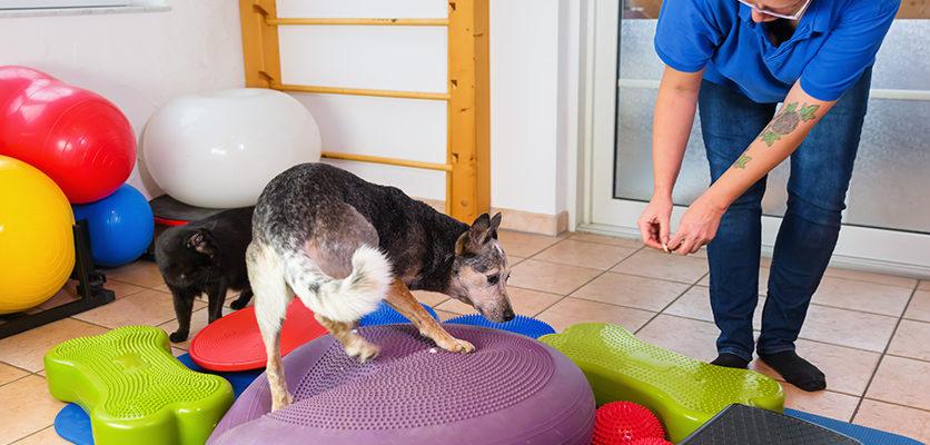 Fisioterapia per l'osteoartrite secondo Dragone