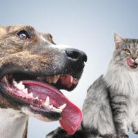 Nuove linee guida per la salute orale di cani e gatti