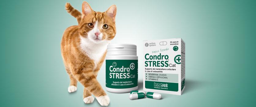 Condrostress®: una nuova formula per gatti in fase cronica