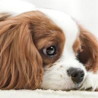 Il dolore nei pet: la sfida continua